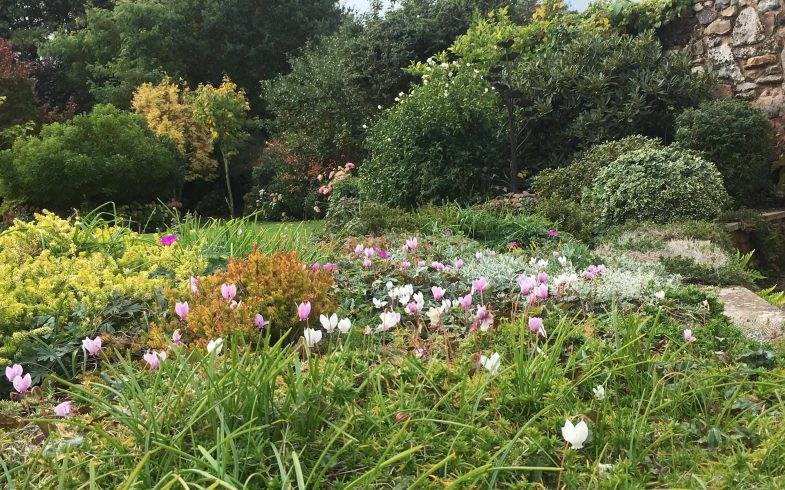 How could a Gardening Consultation with a Professional Horticulturist  benefit you?